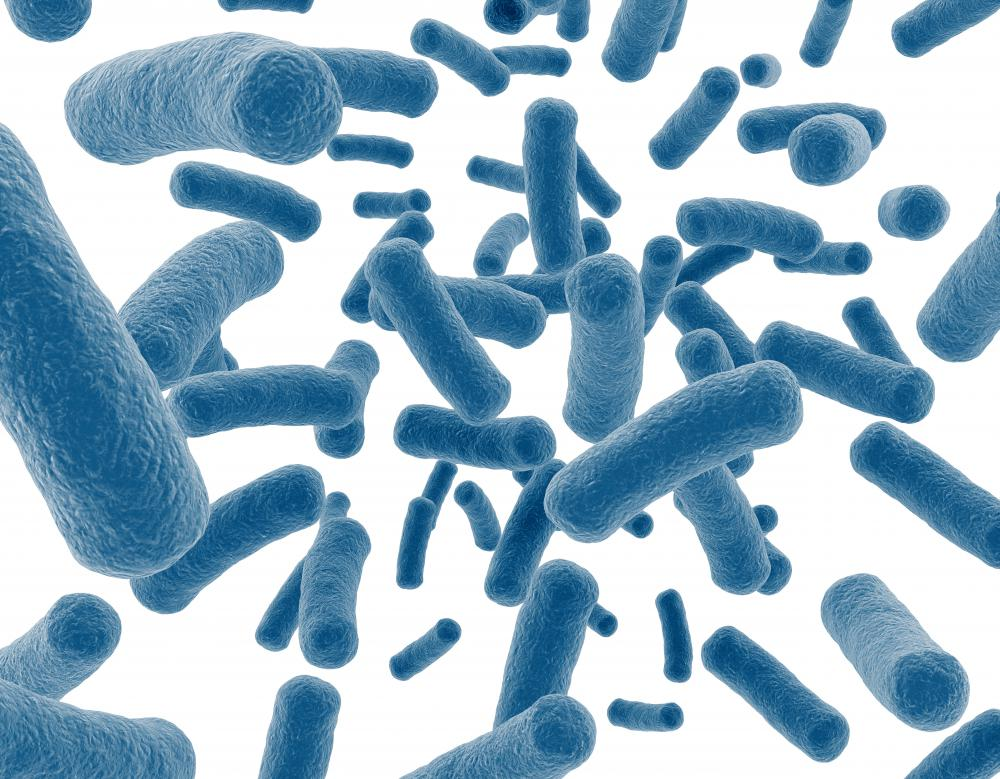Eubacteria, also referred to as true bacteria, are the majority of what we think of as bacteria.