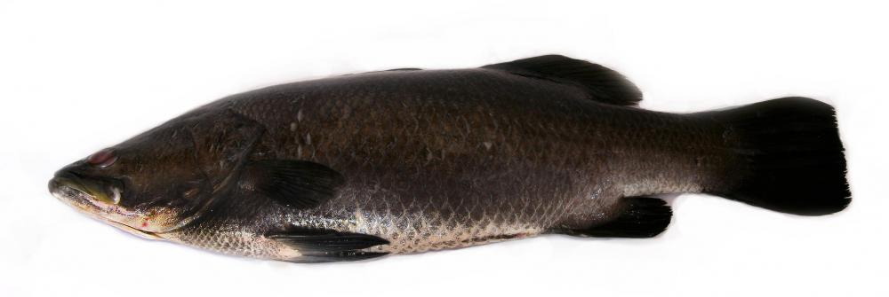 To preserve Chilean sea bass, some promote consuming fish such as barramundi instead.