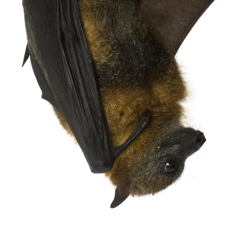 Bats sleep during the day and awake at night.