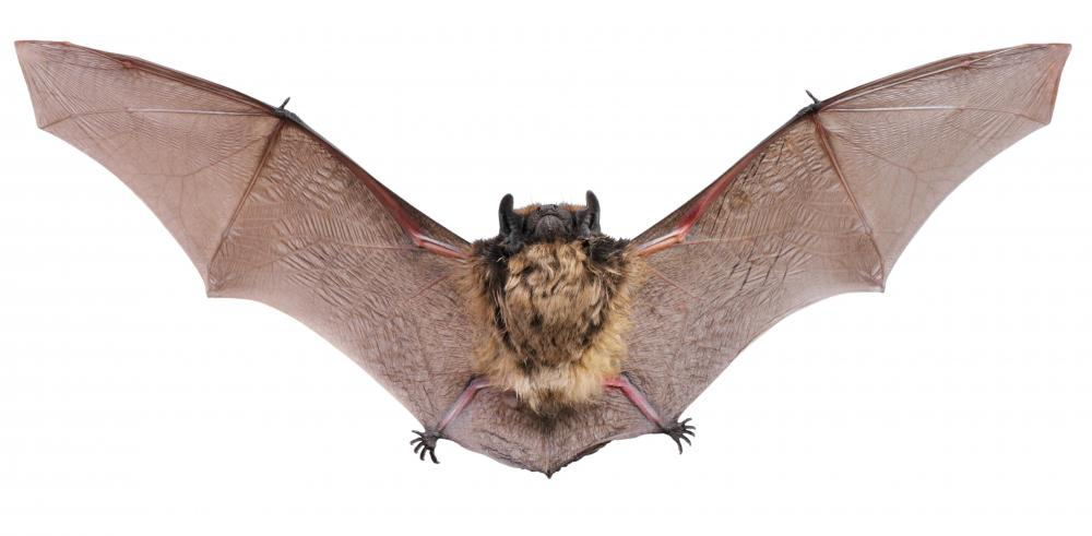 Bats are known to be easily awakened when they go into their winter torpors.