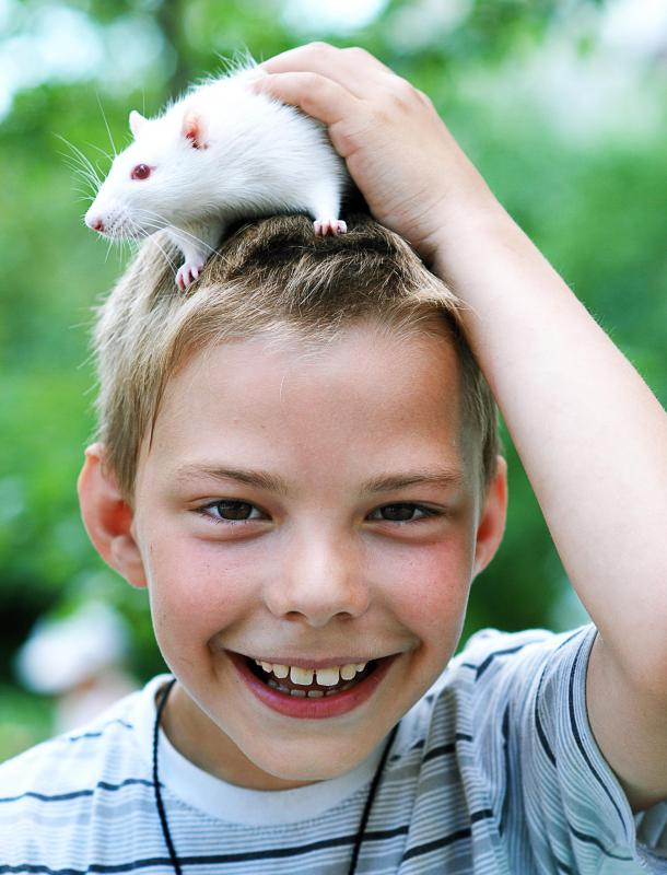 Many pet rats form strong emotional bonds with their carers.