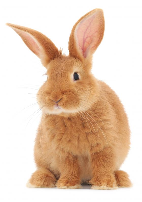 Rabbits can live in a variety of environments.