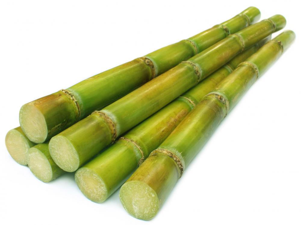 Sugarcane has been grown as a food crop since 6000 B.C.