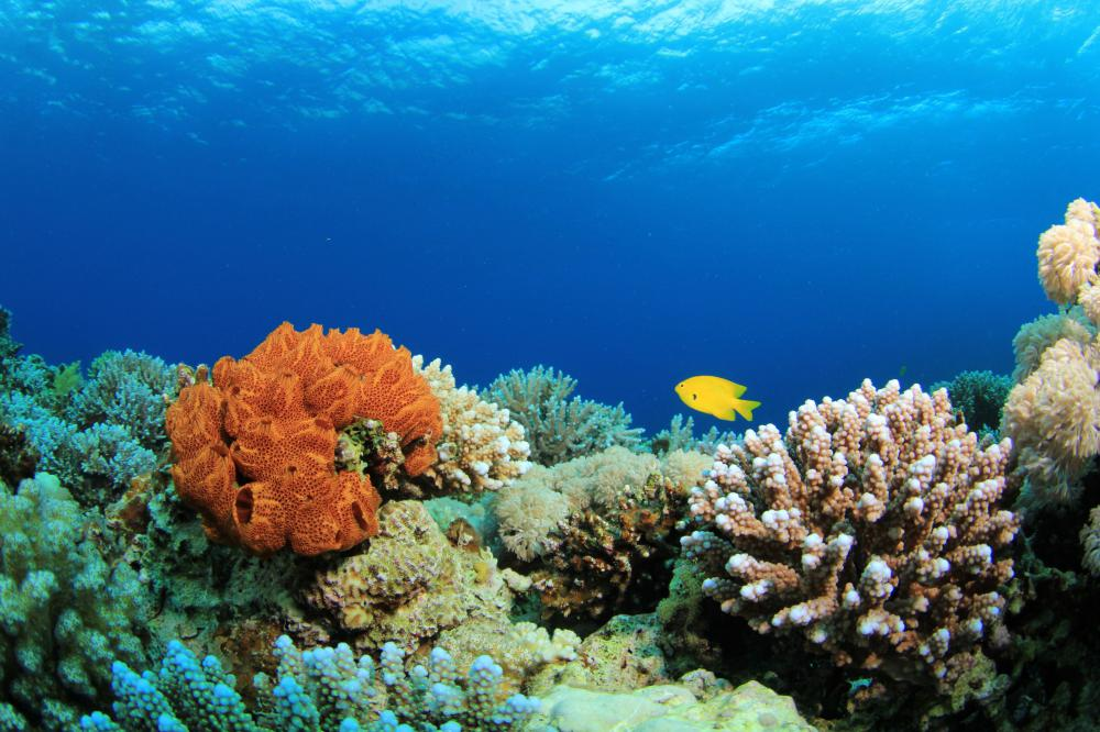 A coral reef is composed of living organisms that have fused together.