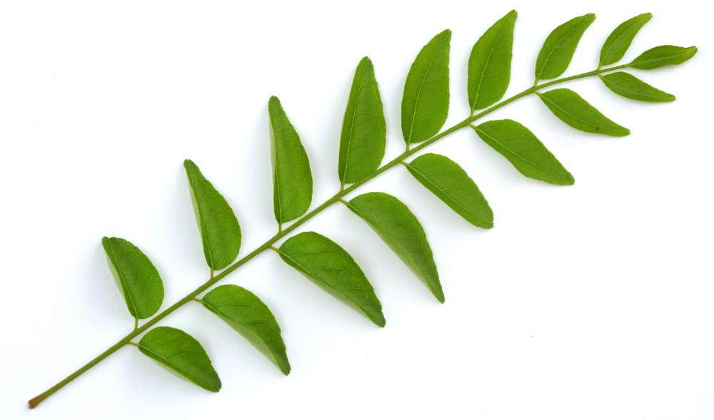 Curry leaves.