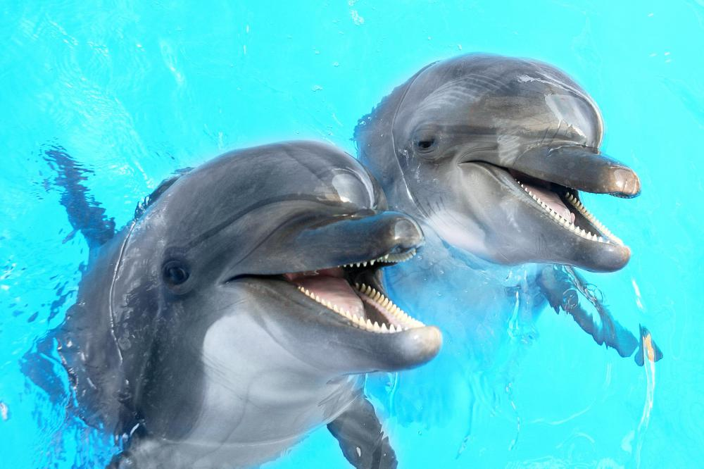 Dolphins use fins to aid in propulsion and stability.