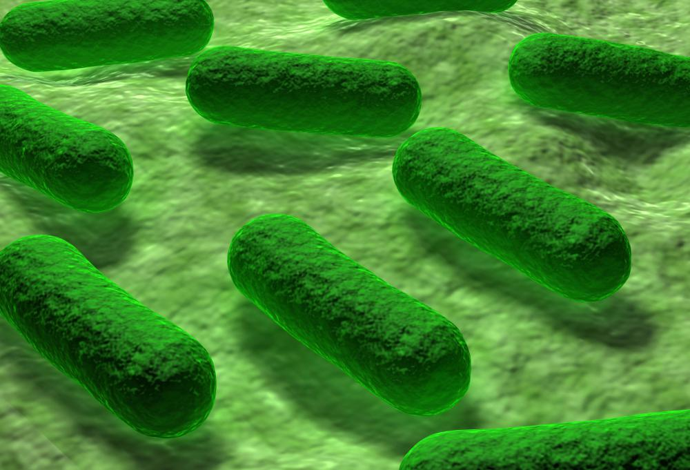 One type of Gram-negative bacteria is E. Coli.