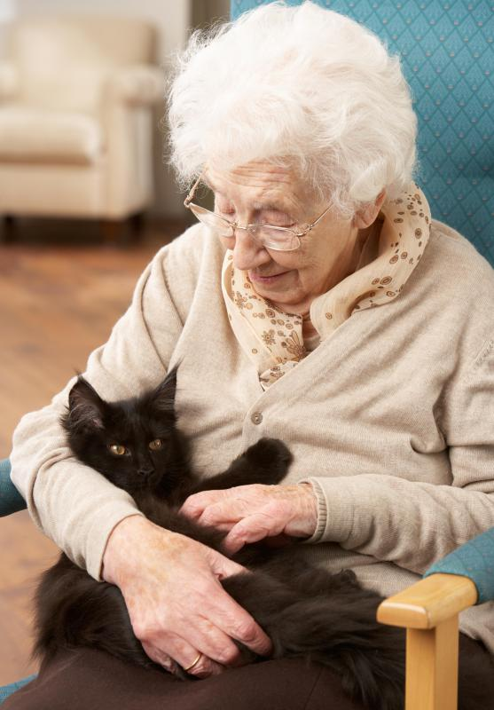 Cats can be beneficial in an animal therapy setting.
