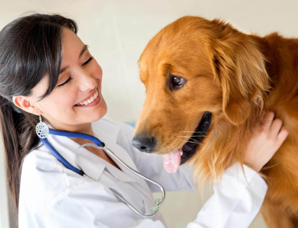 Veterinarians may have to use advanced medical imaging to diagnose and treat animals.