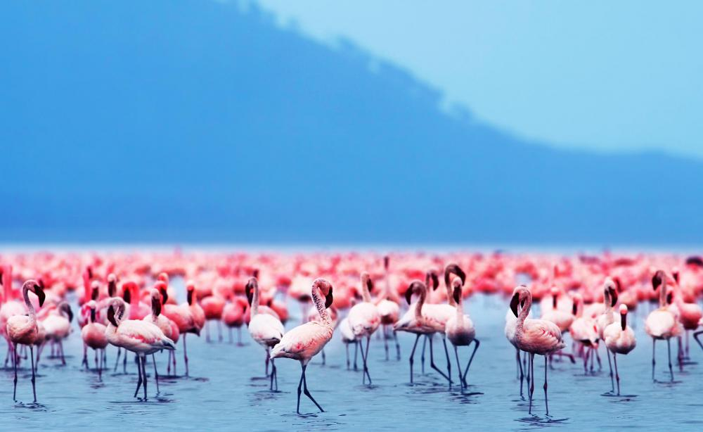 Flamingos live in salty, coastal lagoons.