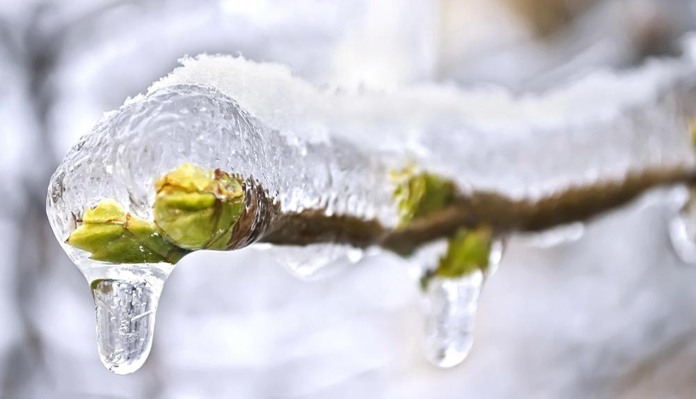 Ice can coat trees and other objects during an ice storm.