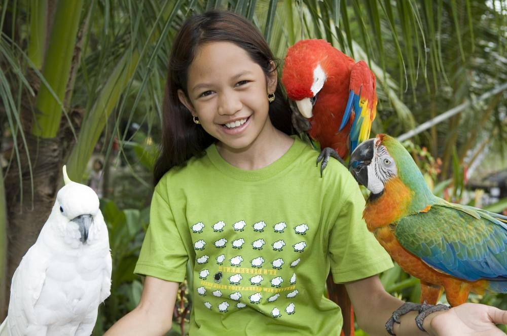 Parrots will generally have a much longer lifespan than cockatiels.