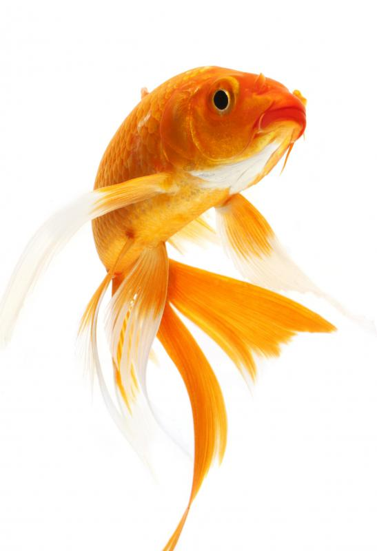 A goldfish might be easy to maintain, but it can't be held or cuddled.