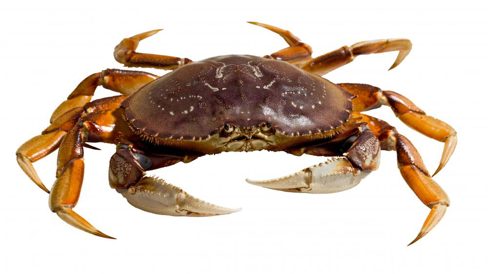 Crabs might be found in coral reefs.