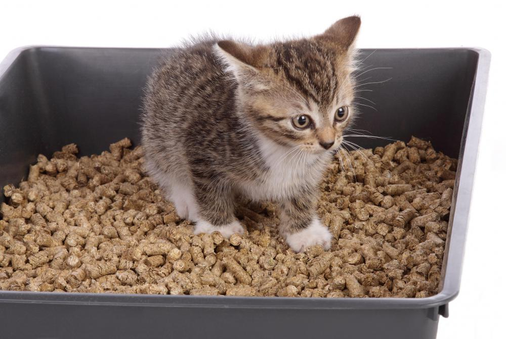 Cats that do not eat enough meat may develop nutritional deficiencies that cause them to eat kitty litter.