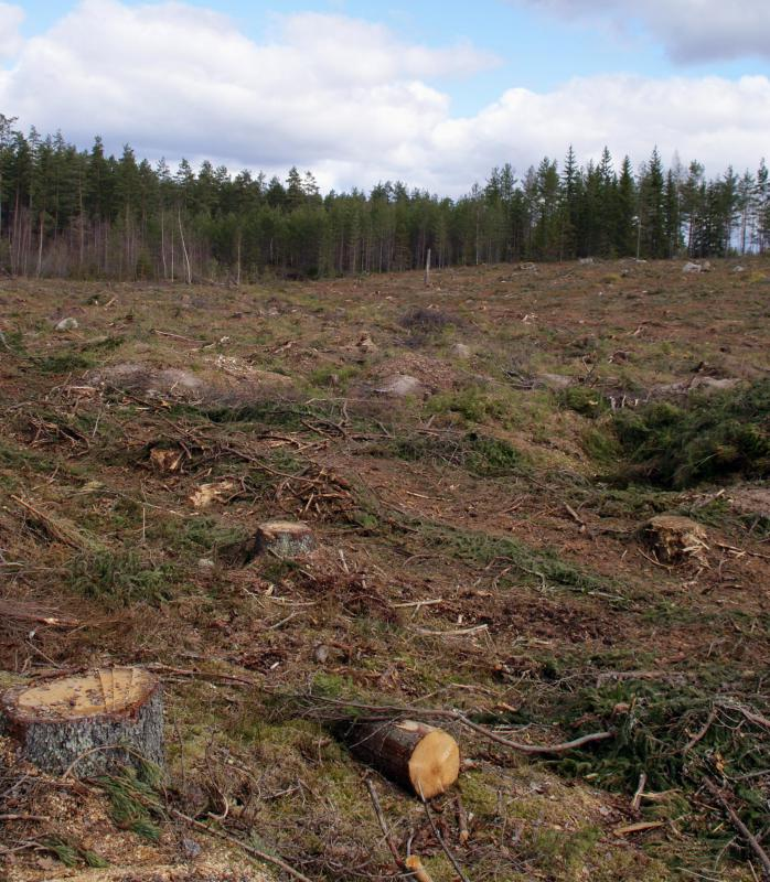 Clearcutting removes all trees from an area.