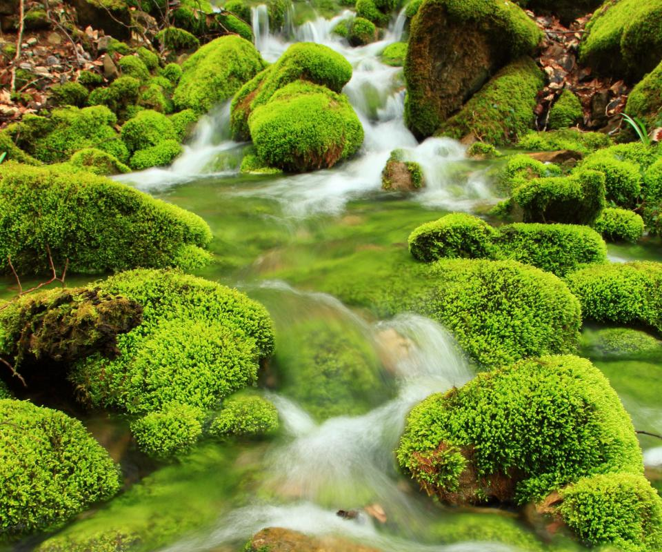Moss growing on stones in a stream.