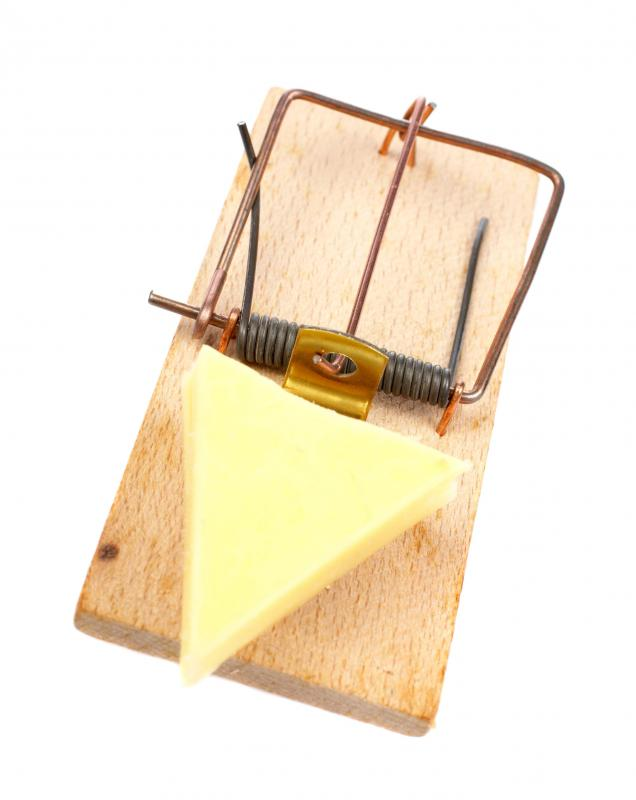 The classic, spring-loaded mouse trap is designed to kill the rodent.