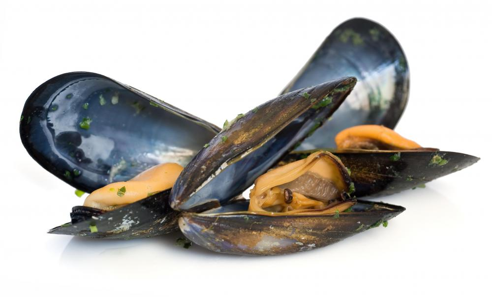 Mussels can accumulate toxins from oil spills.