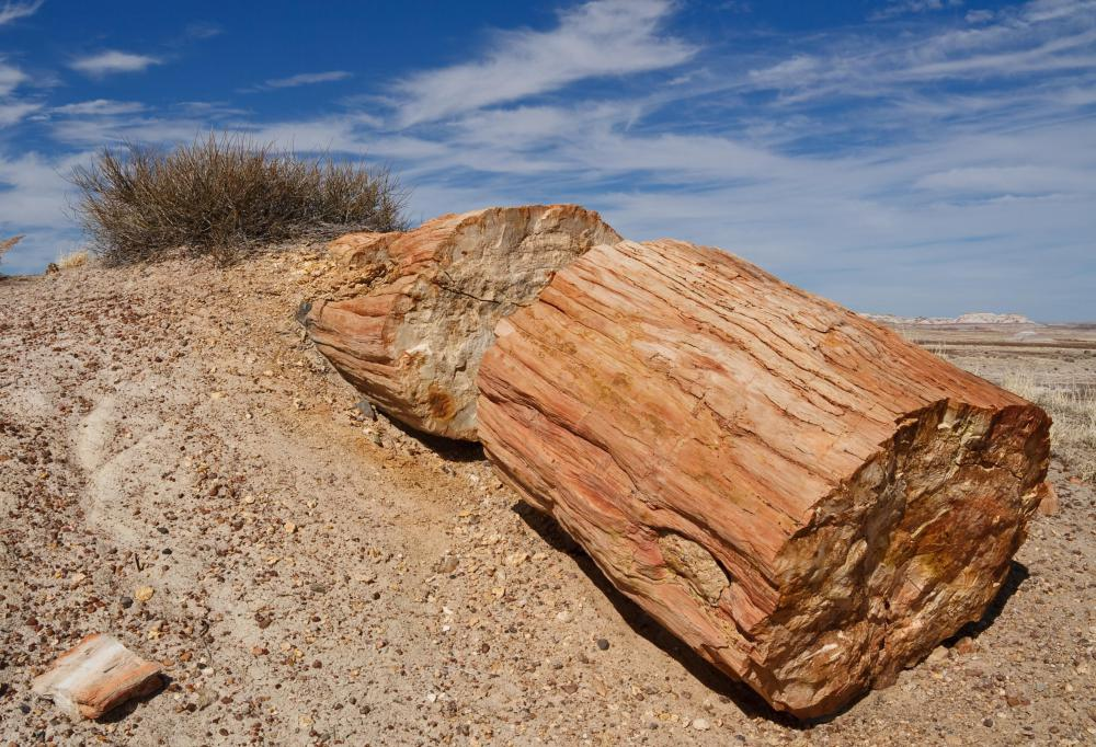 During wood petrification, cellulose and living tissue are replaced by minerals.