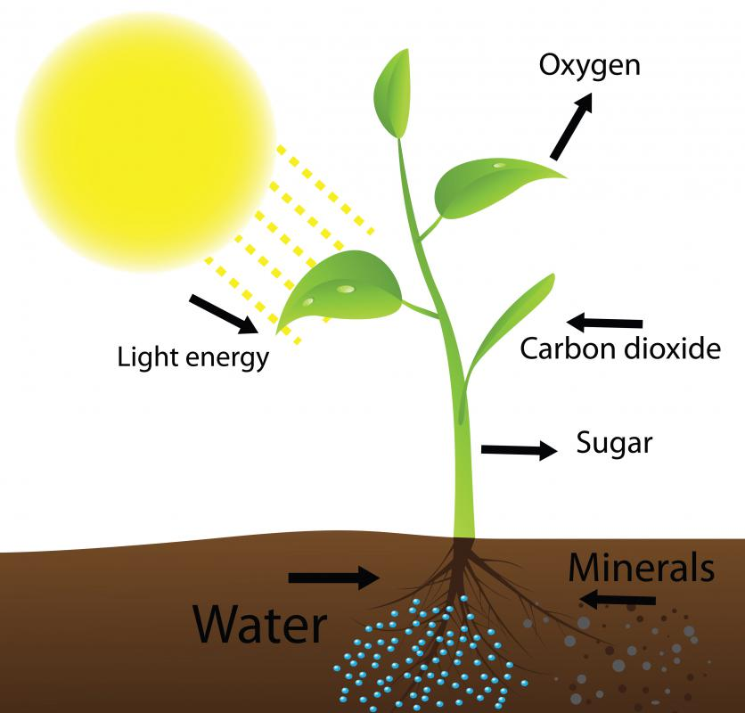 Most of the atmospheric oxygen comes from photosynthesis.