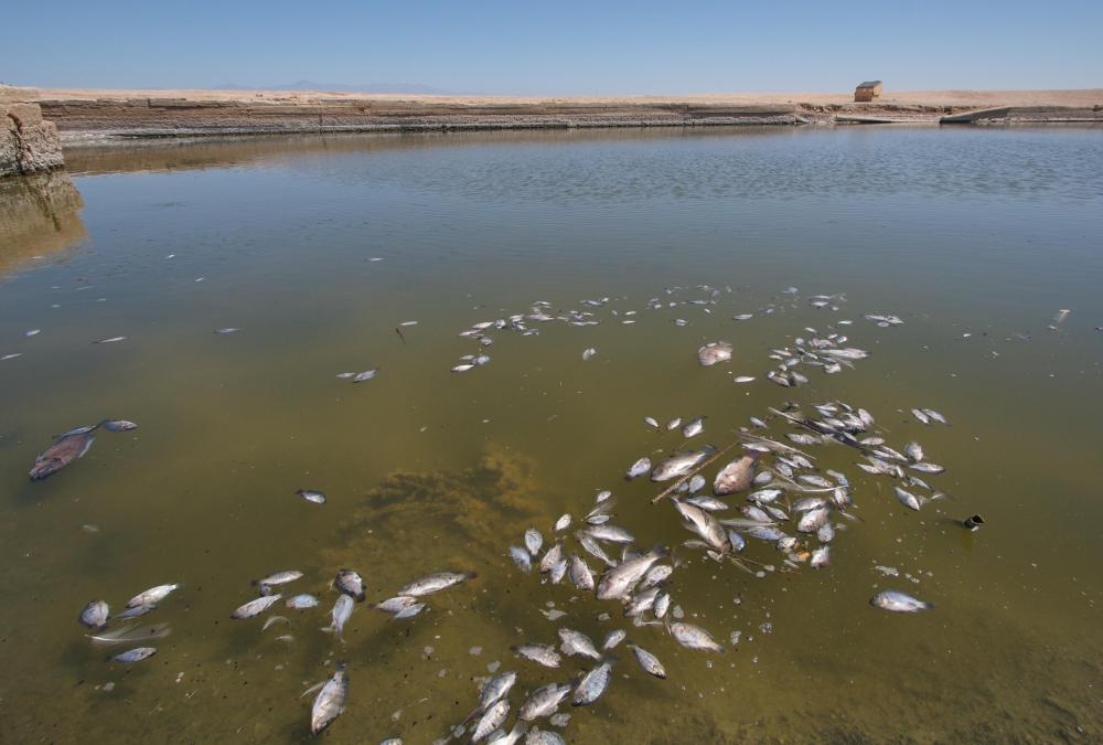 Certain types of pollution can use up dissolved oxygen in water and kill large groups of fish.