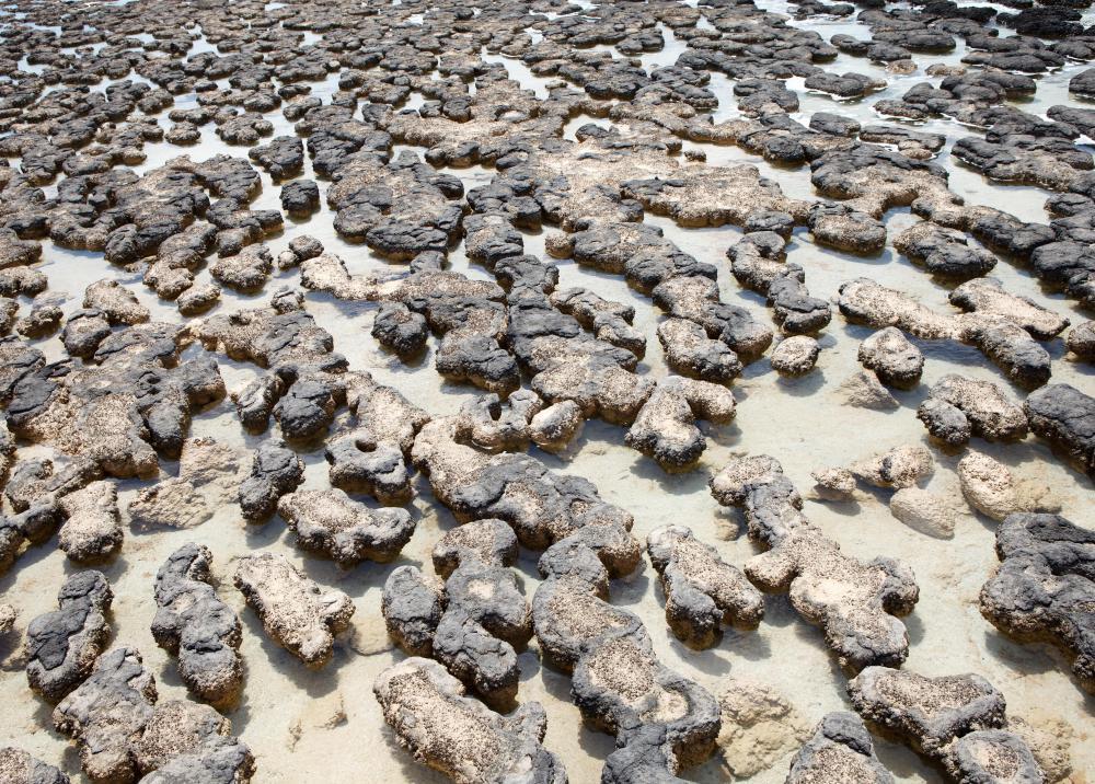 Stromatolites are among the world's oldest fossils.