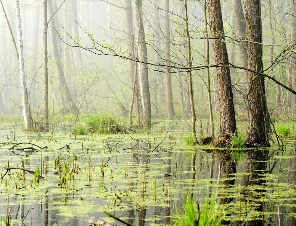 A swamp is made of of both terrestrial and aquatic environments.