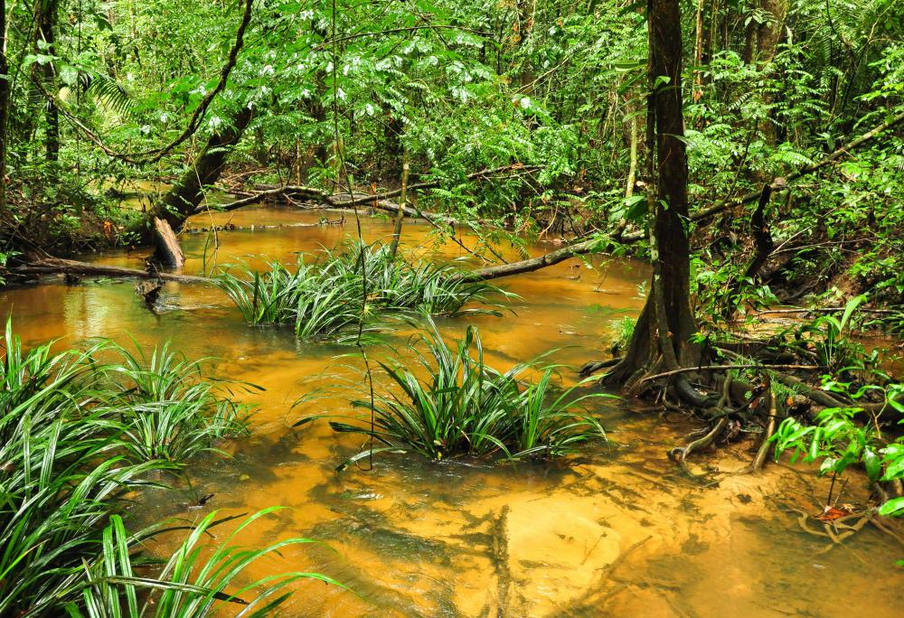 Swamp soil can sustain trees and other large plants.