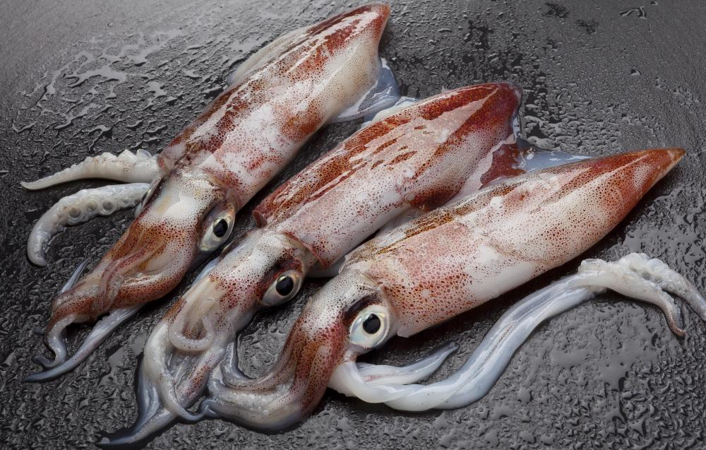An albacore's diet might include small squid.
