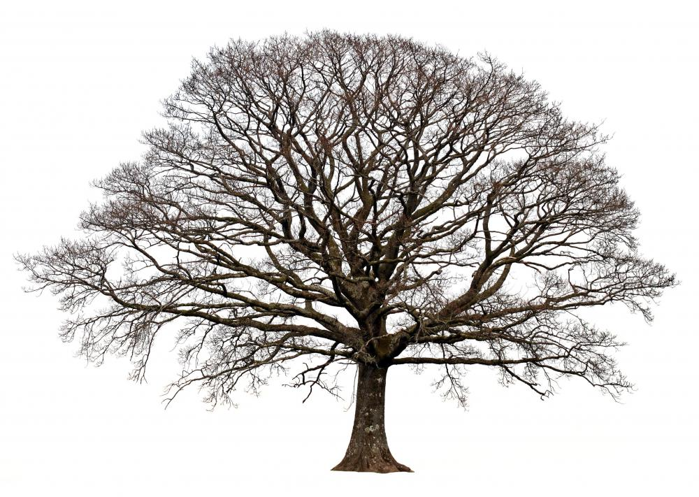 Trees lose their leaves to conserve energy over the winter and to prevent damage to the tree.