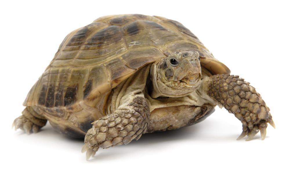 Turtles often hibernate.