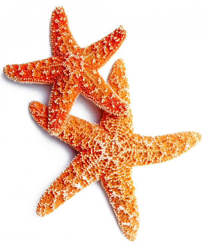 Starfish and other sea life lived in the prehistoric ocean Panthalassa.