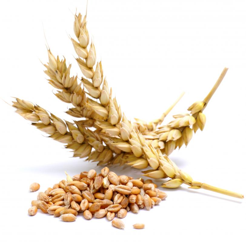 Wheat is a staple crop.