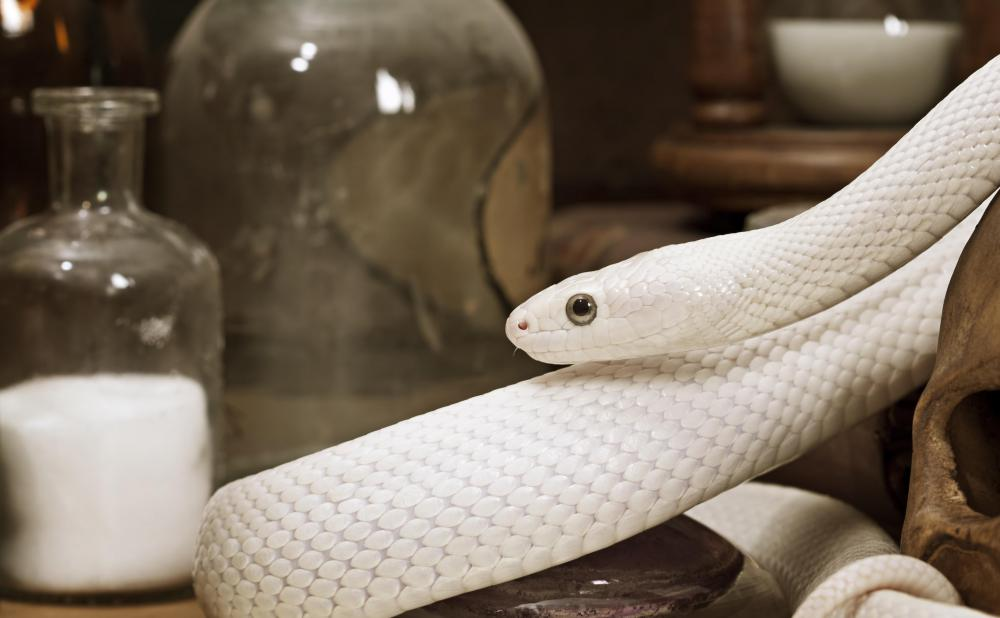 A snake might try to sneak into a house for winter.