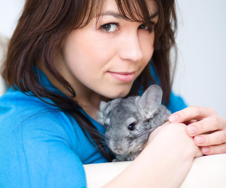 Despite their appearance, chinchillas are not naturally cuddly.