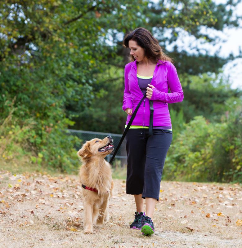 A pregnant dog requires adequate exercise and good nutrition.