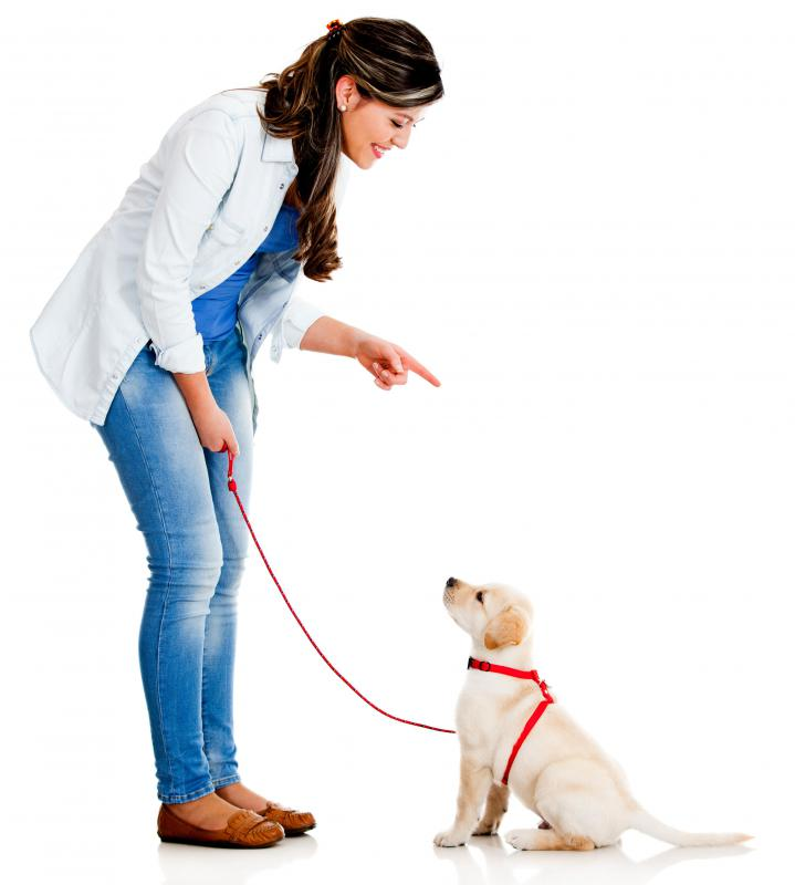 Teaching a dog basic commands is part of good pet ownership.
