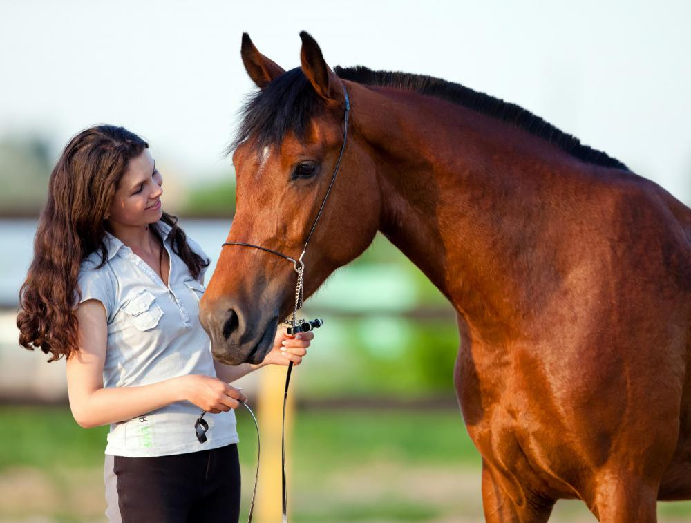A mare is a female horse who is mature enough for sexual reproduction.