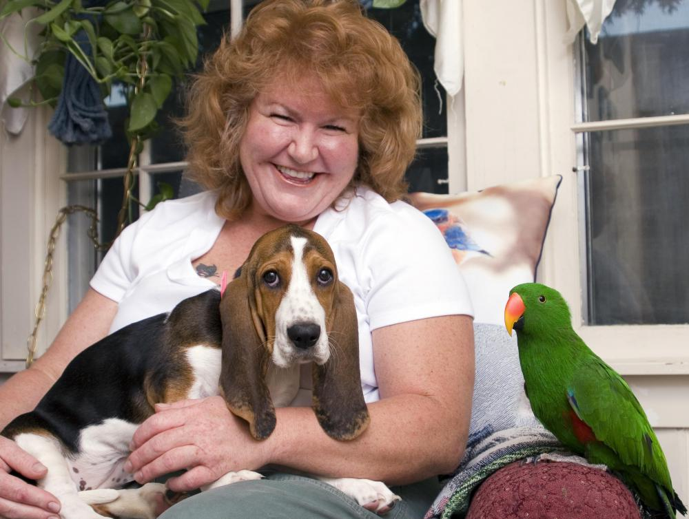 Research seems to show that basset hounds are among the most likely dogs to howl.
