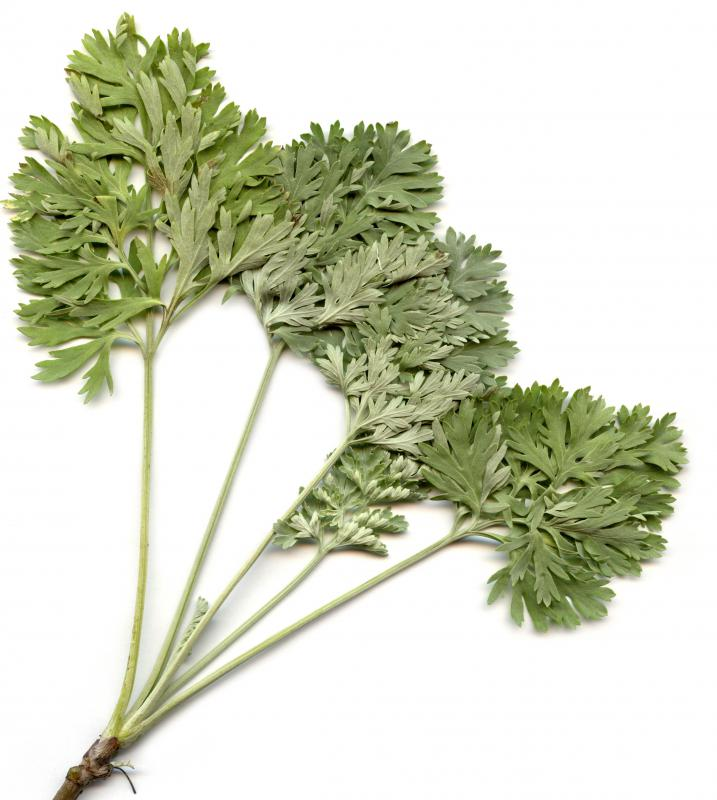 "The term ""mugwort"" may be used to refer to wormwood."